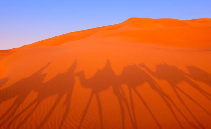 Camel Safari in UAE desert