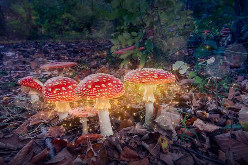 Efteling Fairy Tale Forest Illustration