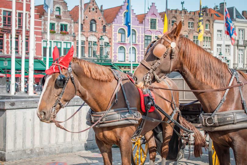 Horses on Bruges Main Market Square