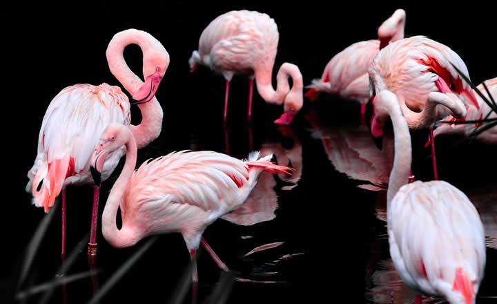 WWT Martin Mere flamingo's